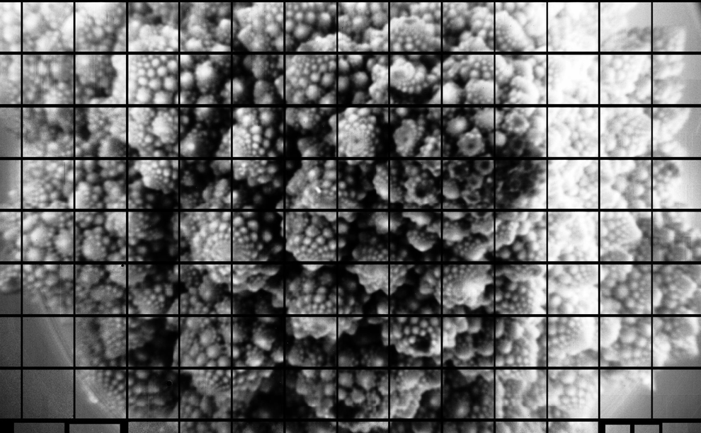Picture of Cauliflower Is the Biggest Photograph Ever Taken – and Could Help Us Unravel the Mysteries of the Universe