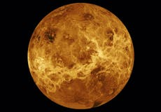 Possible signs of alien life discovered on Venus