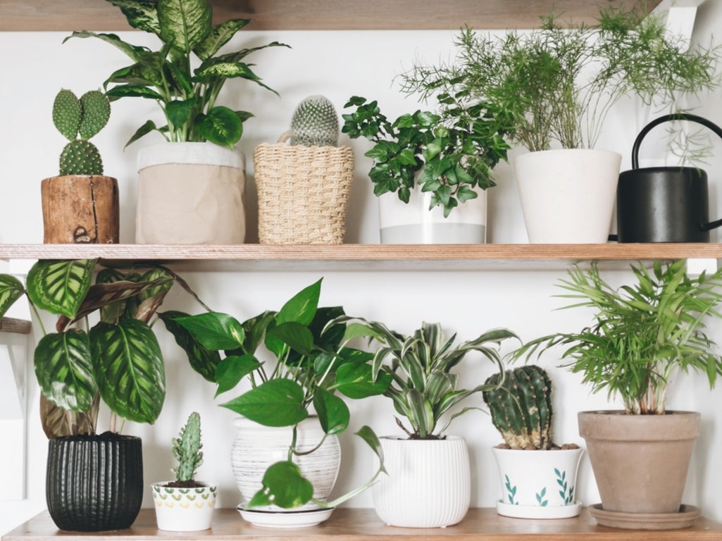 Summer's nearly over, it's time to think about houseplants again
