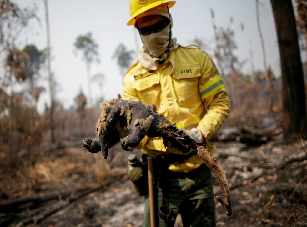 Cleio Junior, a fire brigade member of Brazilian Institute for the Environment and Renewable Natural Resources, holds a dead anteater while attempting to control hot points in a tract of the Amazon jungle