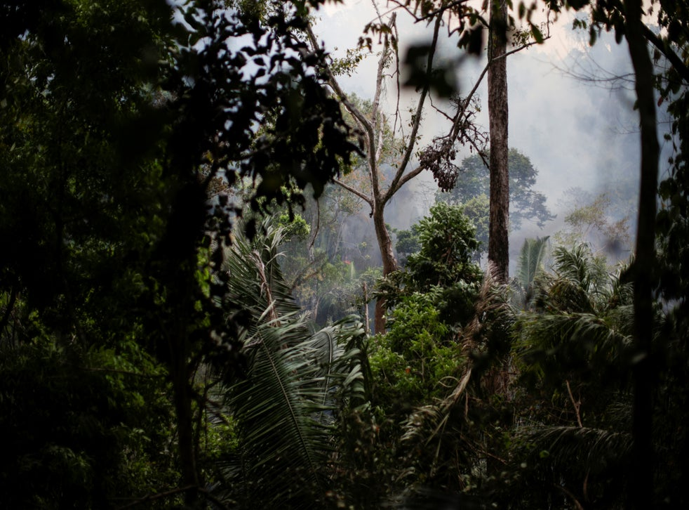 A tract of the Amazon jungle near Ouro Preto, Rondonia. In the dry season ranchers and land speculators set fires to clear deforested woodland for pasture. Blazes can rage out of control, and wildlife flee from the smoke and flames