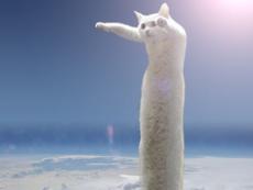Muere el gato del meme 'Longcat' a los 18 años, el Internet está de luto