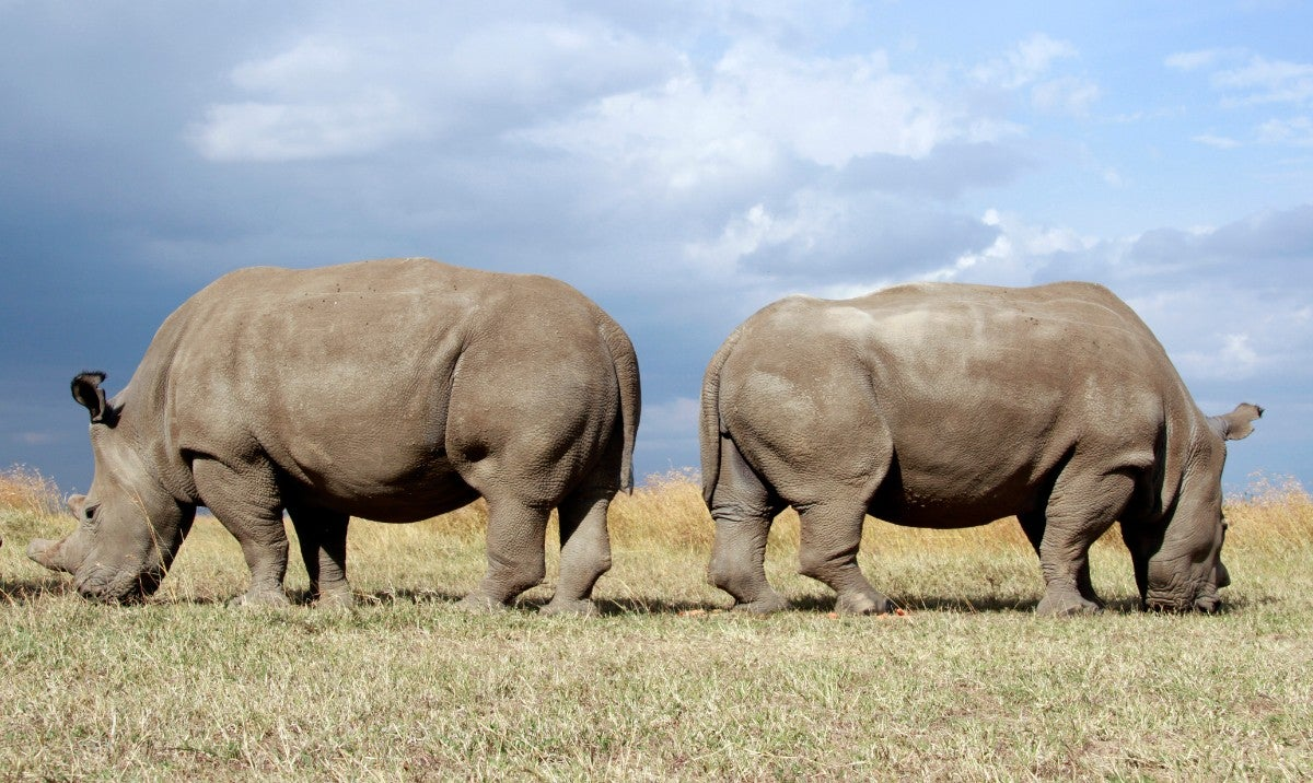 Opinion: Terrifying wildlife losses show the extinction end game has begun