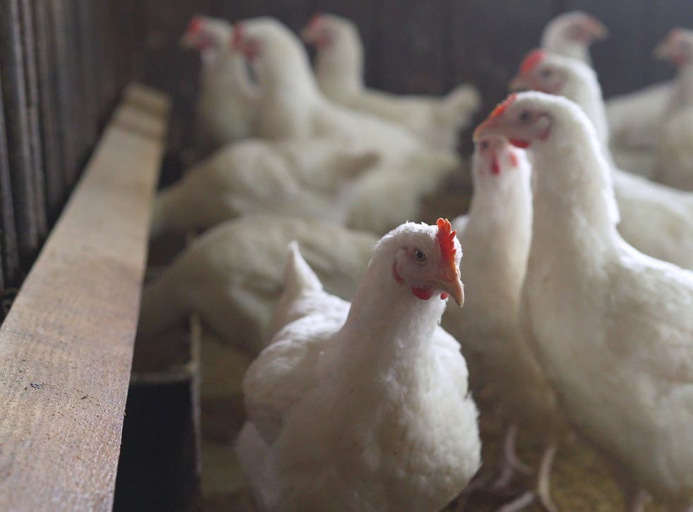 <p>Bird flu has been detected at a farm in Kent</p>