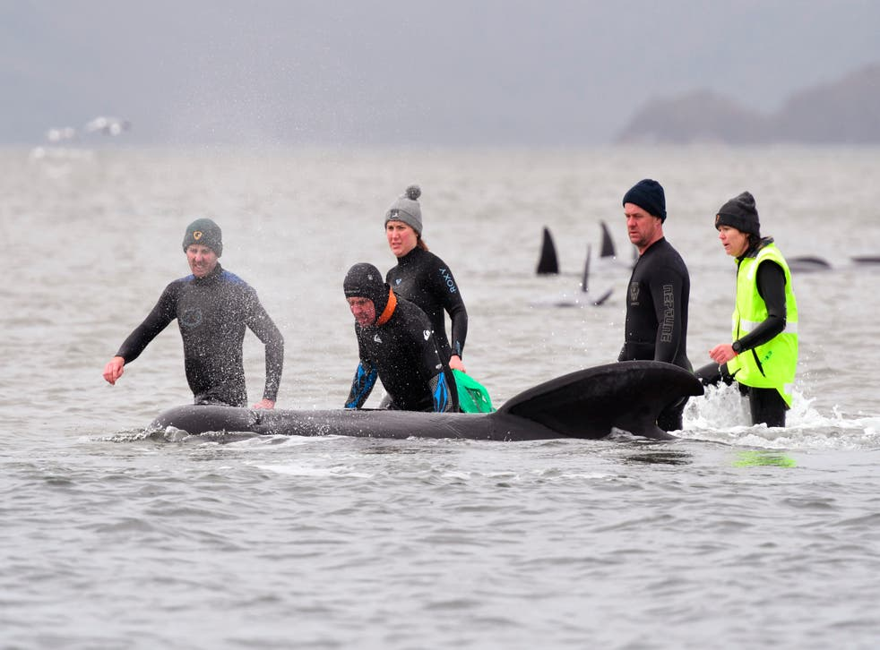 Australia Stranded Whales