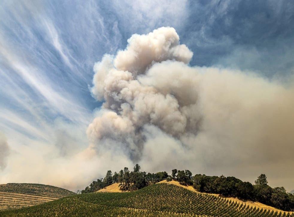 En esta imagen del 18 de agosto de 2020, el humo del incendio de Hennessey se alza sobre un viñedo en el condado de Napa. El humo de los incendios forestales en la Costa Oeste de Estados Unidos ha impregnado las uvas en algunas de las zonas vinícolas más apreciadas del país con un sabor a ceniza que podría suponer un desastre para la añada de 2020.