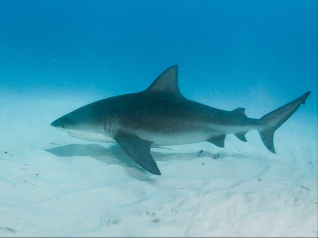 Mujer embarazada salvó a su marido del ataque de un tiburón.