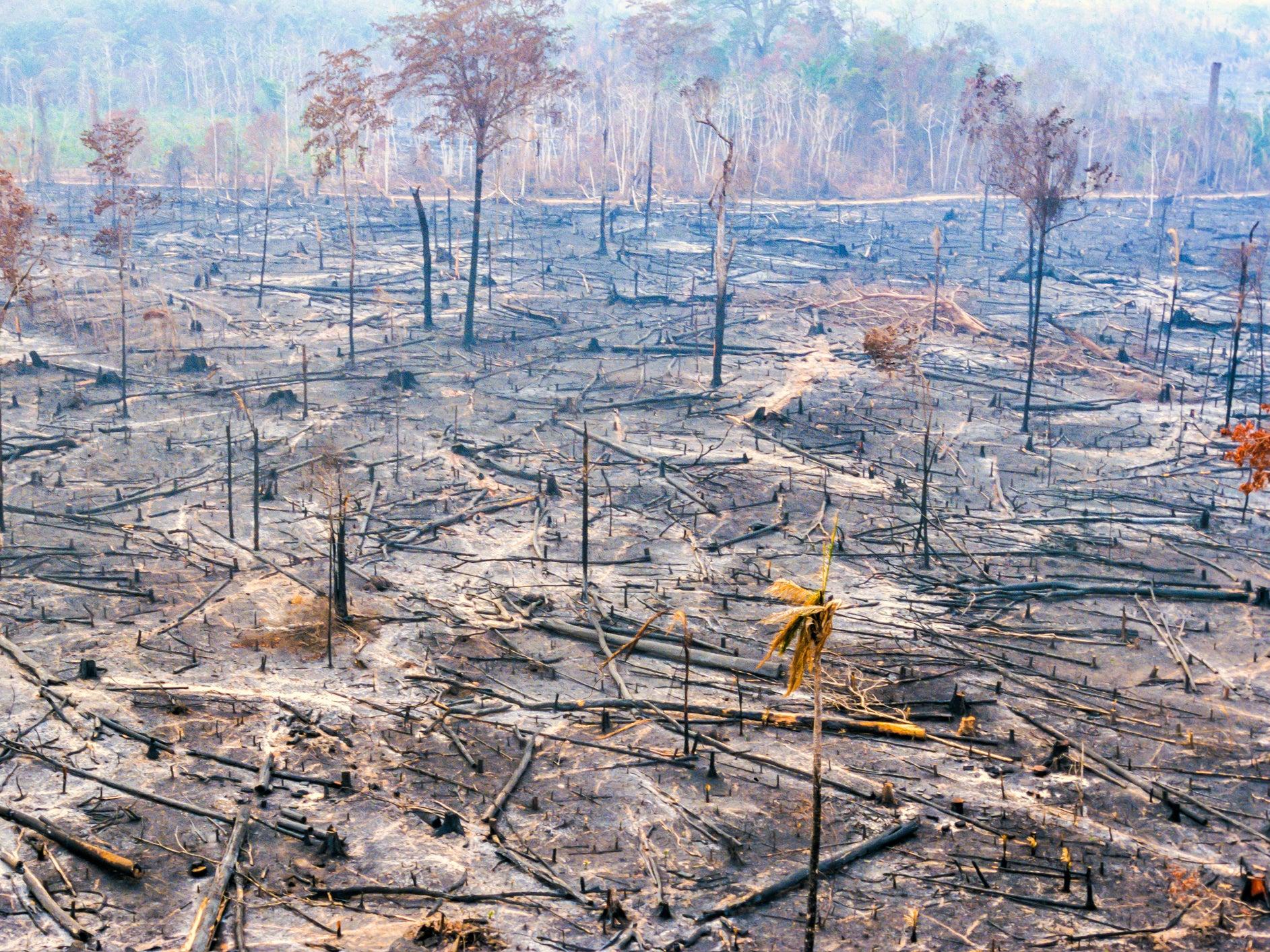 Biodiversity crisis: US, China, Australia and Brazil refuse to sign pledge to reverse damage to natural world