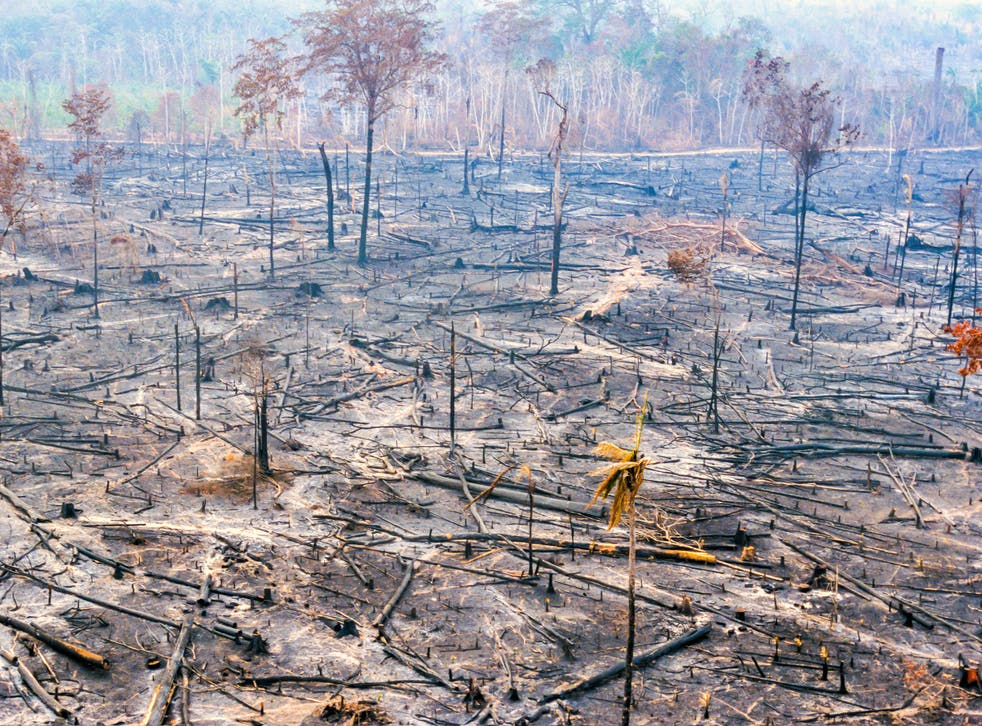 <p>Our current demands of nature 'far exceed its capacity to supply us with the goods and services we all rely on'</p>
