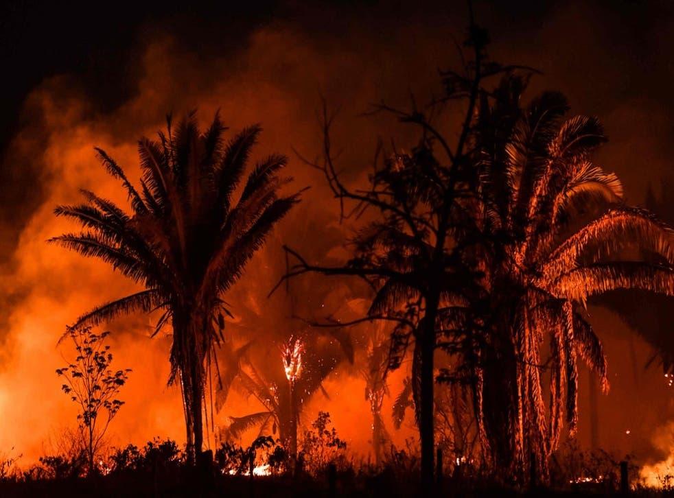 <p>Los madereros y agricultores están quemando grandes extensiones de la selva amazónica</p>