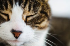 How to get your cat to like you, according to science