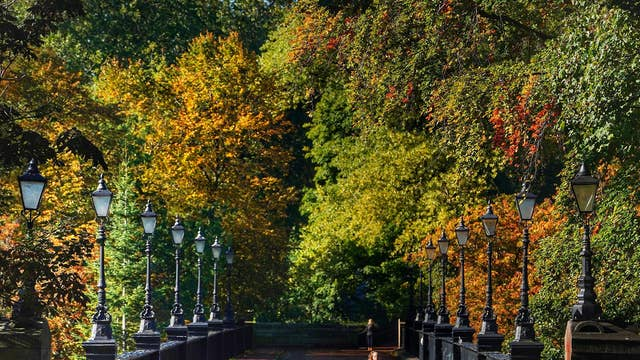 A jogger runs over the Armstrong Bridge in Jesmond, Newcastle surrounded by Autumn colours