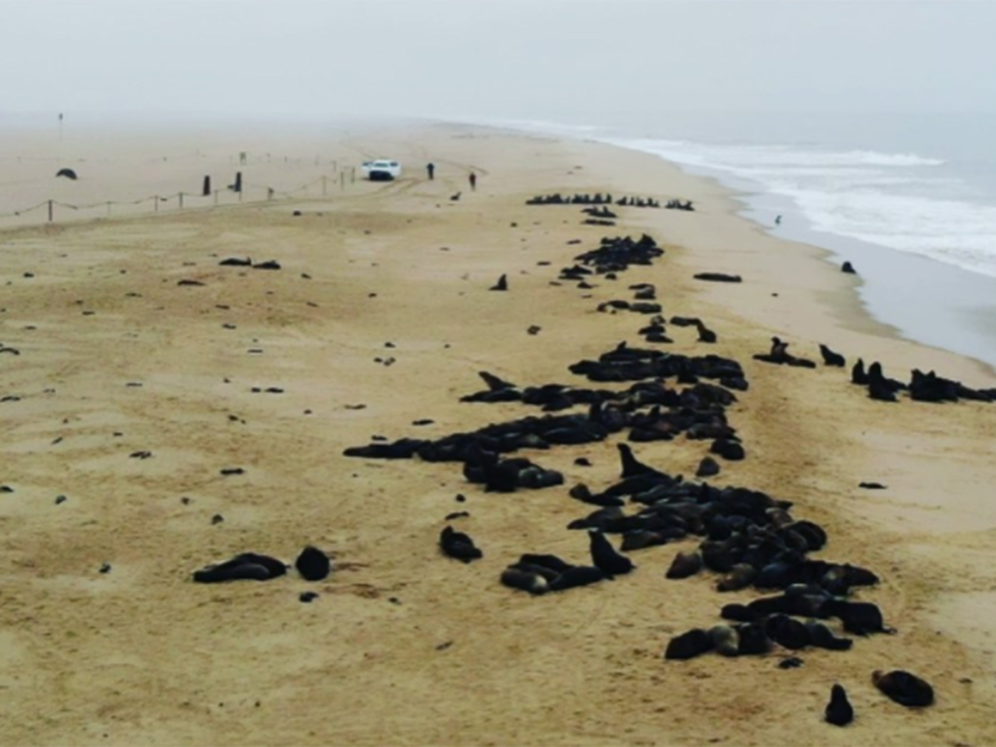 Thousands of seal pups discovered dead in mysterious mass die-off at colony in Namibia