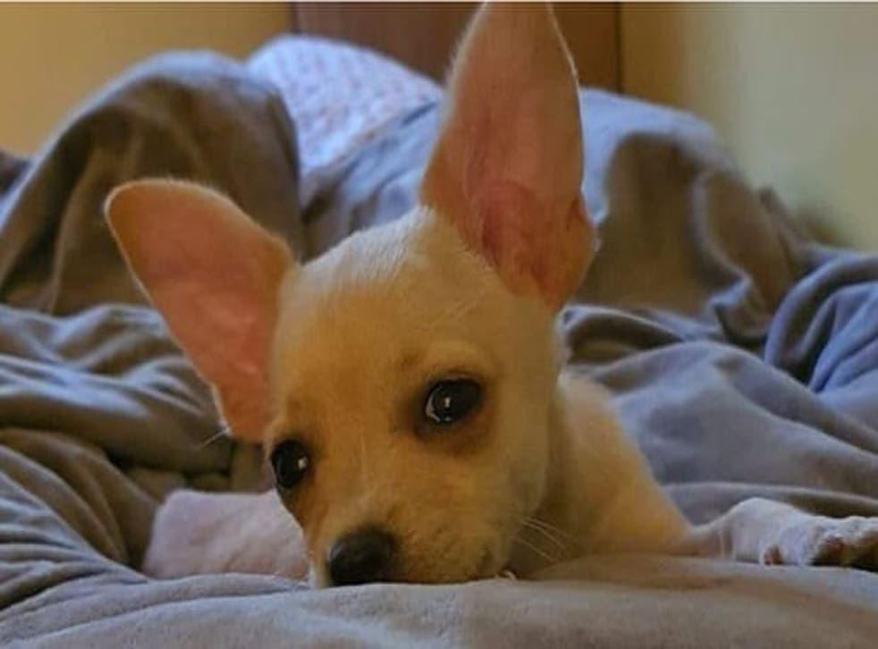 Raya the puppy