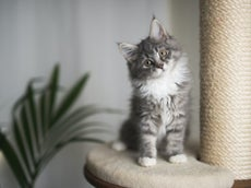 Feeling stressed and lonely? A cat could be the answer
