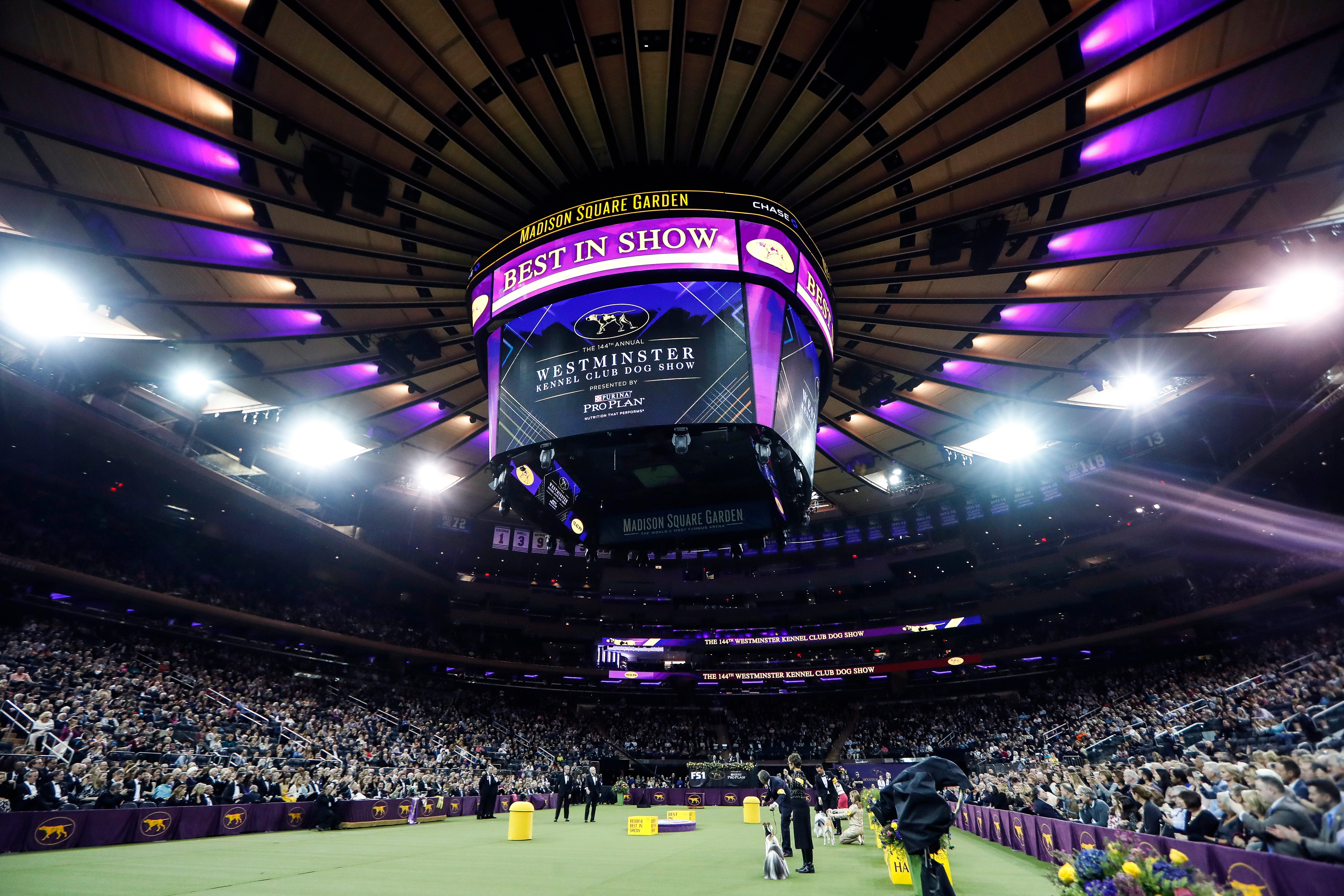 Wanna go for a walk? Westminster dog show leaves NYC for '21