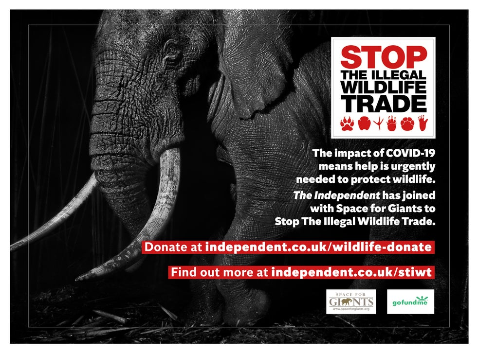 We are working with conservation charity Space for Giants to protect wildlife at risk from poachers due to the conservation funding crisis caused by Covid-19. Help is desperately needed to support wildlife rangers, local communities and law enforcement personnel to prevent wildlife crime