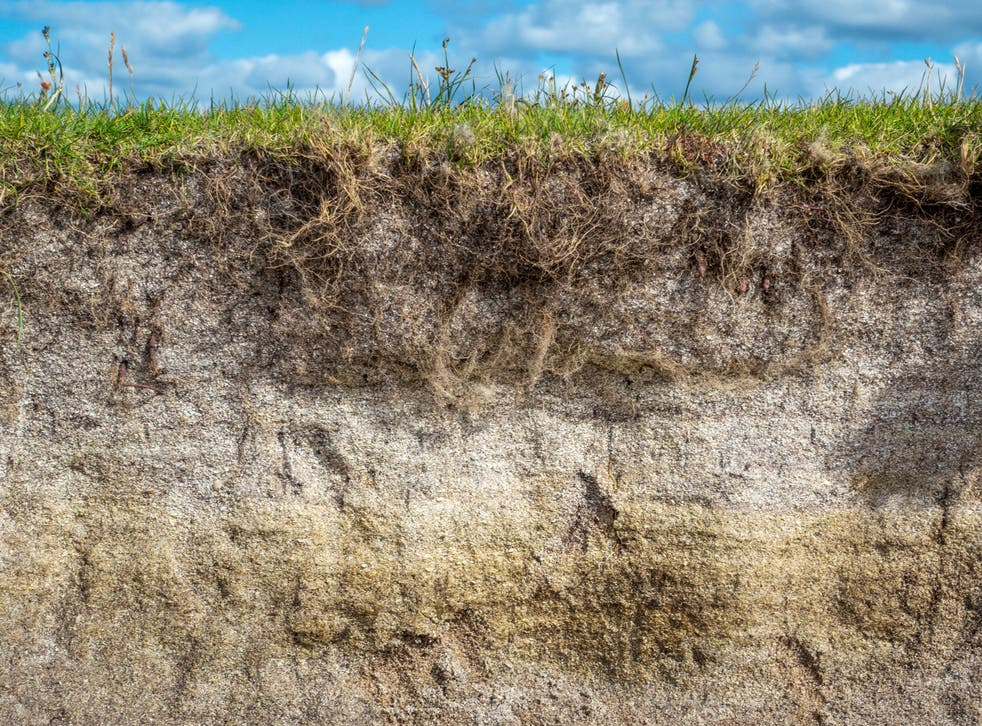 Soils contain between two and three times as much carbon as the atmosphere, but the warmer it gets, the faster it is lost