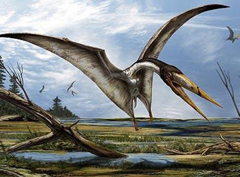 <p>Una impresión artística emitida por Davide Bonadonna de Alanqa del norte de África, que según los paleantólogos se parece a la especie de pterosaurio recién descubierta.</p>