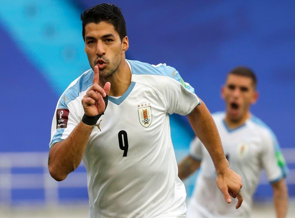<p>Suárez, junto con otros dos jugadores de la Celeste, dio positivo en las pruebas del lunes</p>