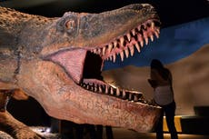 Dinosaurs were not in decline at moment asteroid hit and wiped them out, study shows
