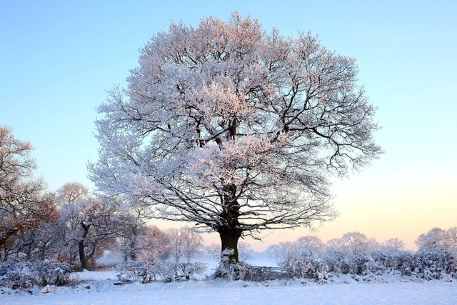 Frost in the UK