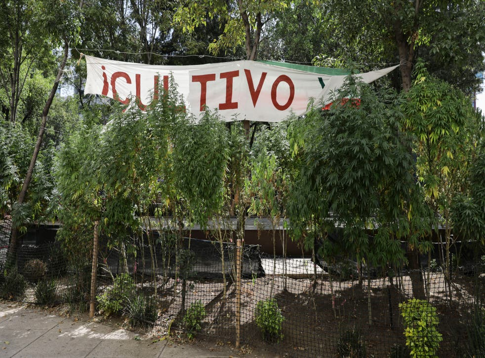 MEXICO-MARIHUANA-LEGALIZACION