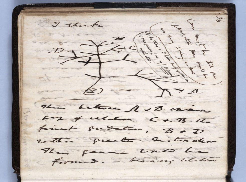 Uno de los cuadernos perdidos de Charles Darwin contenía su boceto del Árbol de la vida de julio de 1837.