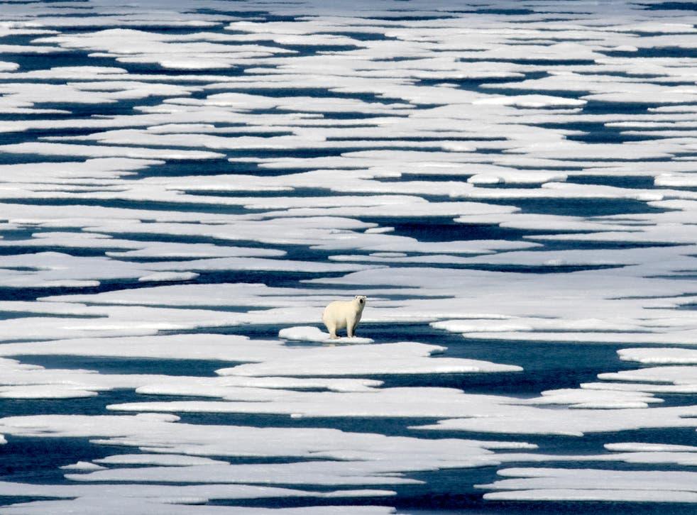 Un oso polar se encuentra sobre el hielo en el estrecho de Franklin en el archipiélago ártico canadiense