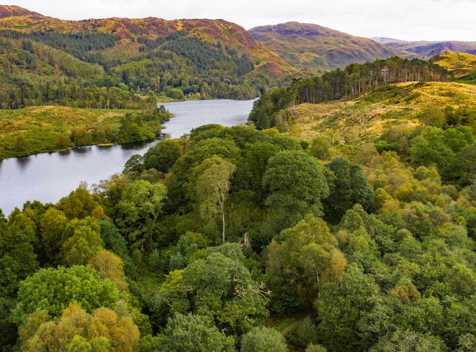 <p>Woodland in Dumfries and Galloway in Scotland</p>