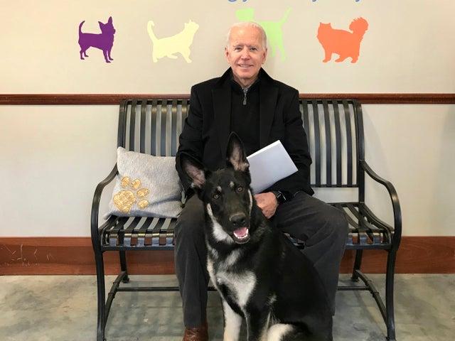 Joe Biden y su pastor alemán Major recientemente adoptado, en Wilmington, Delaware. El viernes 13 de noviembre de 2020, The Associated Press informó sobre una versión manipulada de esta foto que circula en línea, distorsionando el tamaño del perro. (Stephanie Carter / Asociación Protectora de Animales de Delaware vía AP)