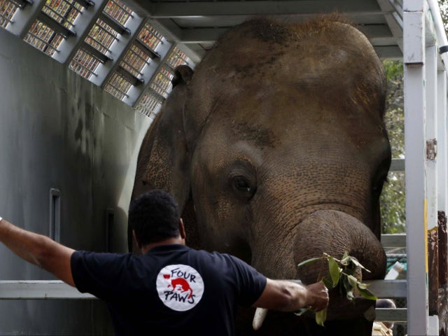 'World's loneliest elephant' ready to fly to new sanctuary