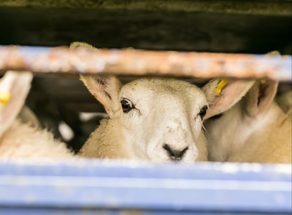 Around 6,400 live animals were exported direct to slaughter from the UK in 2018