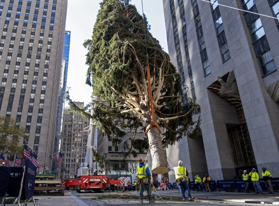 ARCHIVO - En esta foto de archivo del 14 de noviembre de 2020, trabajadores instalan un abeto noruego en el Rockefeller Center de Nueva York que será el tradicional árbol de Navidad de este año. La ceremonia de encendido el miércoles 2 de diciembre de 2020 estará sujeta a normas estrictas impuestas por la pandemia de coronavirus.