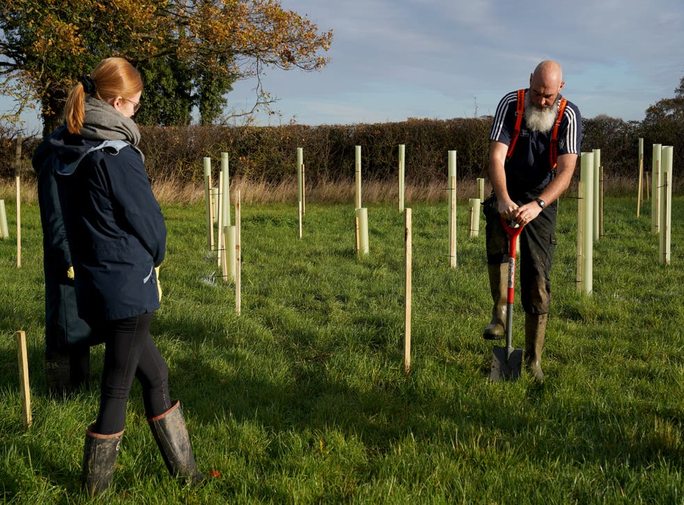 <p>It's hoped that the trees will eventually store 100,000 tonnes of carbon – equivalent to more than 45,000 transatlantic flights</p>
