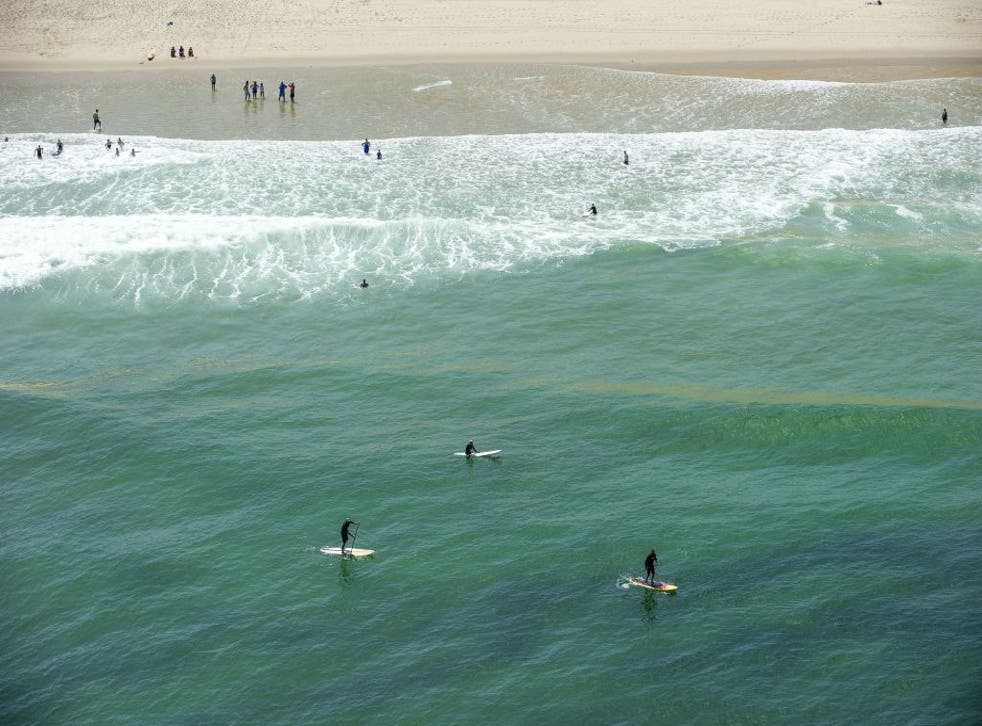 There have been eight deaths relating to shark attacks in Australian waters so far in 2020