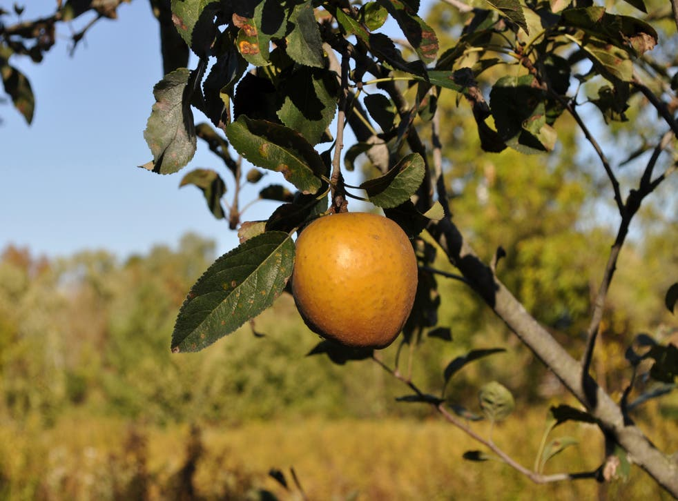 Gardening Best Tasting Apples