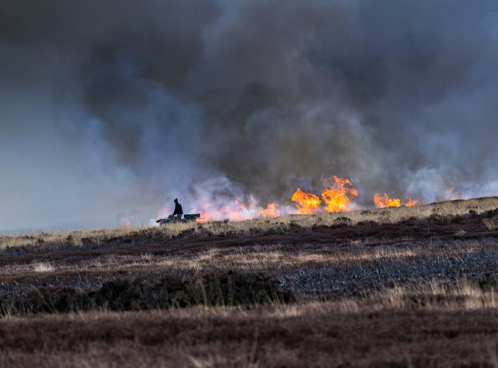 Burning heather so new shoots grow to feed the grouse. North Yorkshire Moors, England