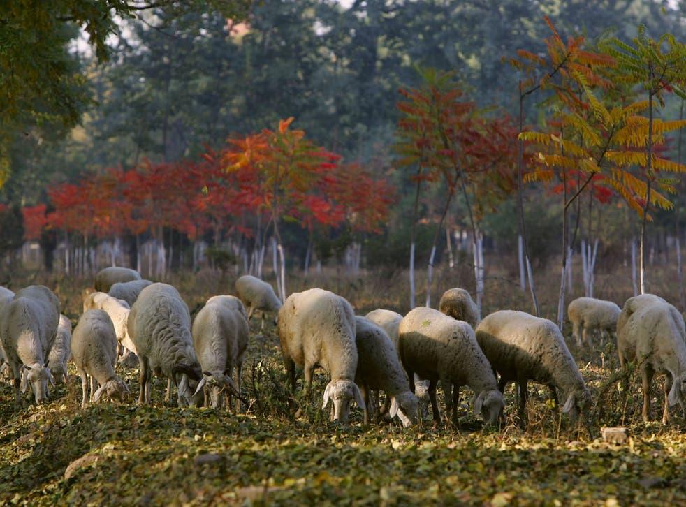 Gore abogó por mezclar pasto y cobertura de árboles en tierras de cultivo