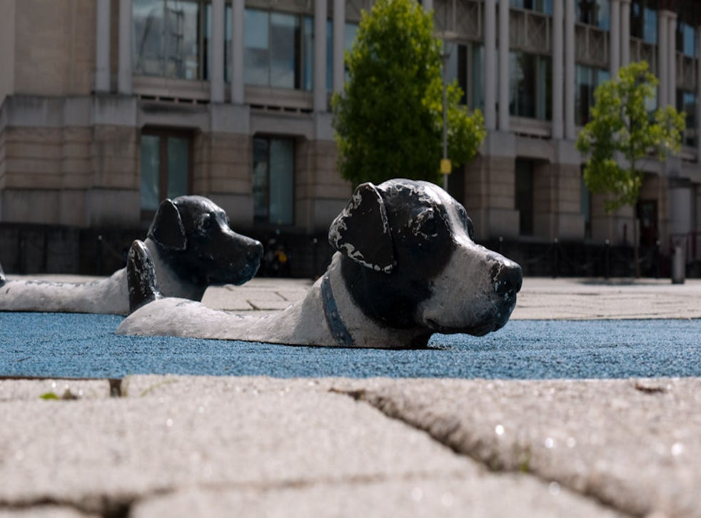 'Swimming' dogs in Bristol