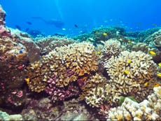Unique 'climate refuge' for coral discovered off coast of east Africa