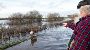 A dog retrieves a hard hat from flood water in Sutton in Cambridgeshire, as the Met Office have warned the next couple of months are likely to be wetter than normal in the UK, raising the prospect of flooding