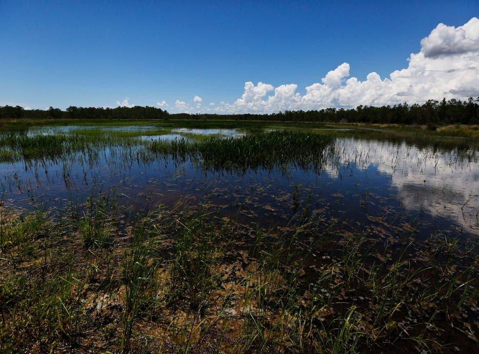 Humedales de Florida