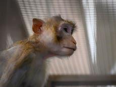 La NASA mató a 27 monos en un día en 2019, según un informe
