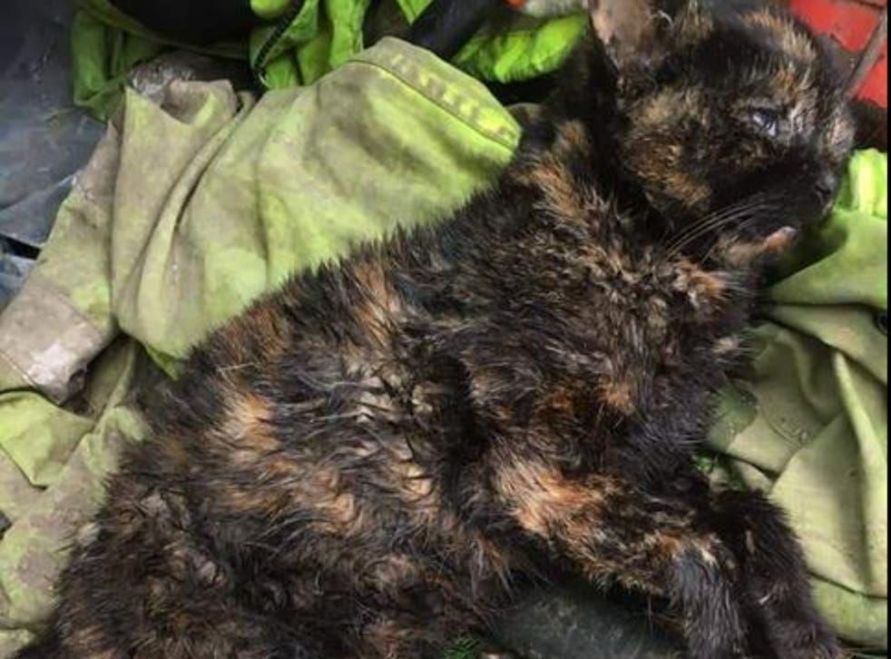 <p>Un perro arrebató al aterrorizado animal de abajo de un automóvil en un jardín privado.&nbsp;</p>
