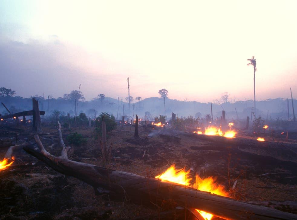 Un páramo en llamas en lo que solía ser parte de la selva amazónica
