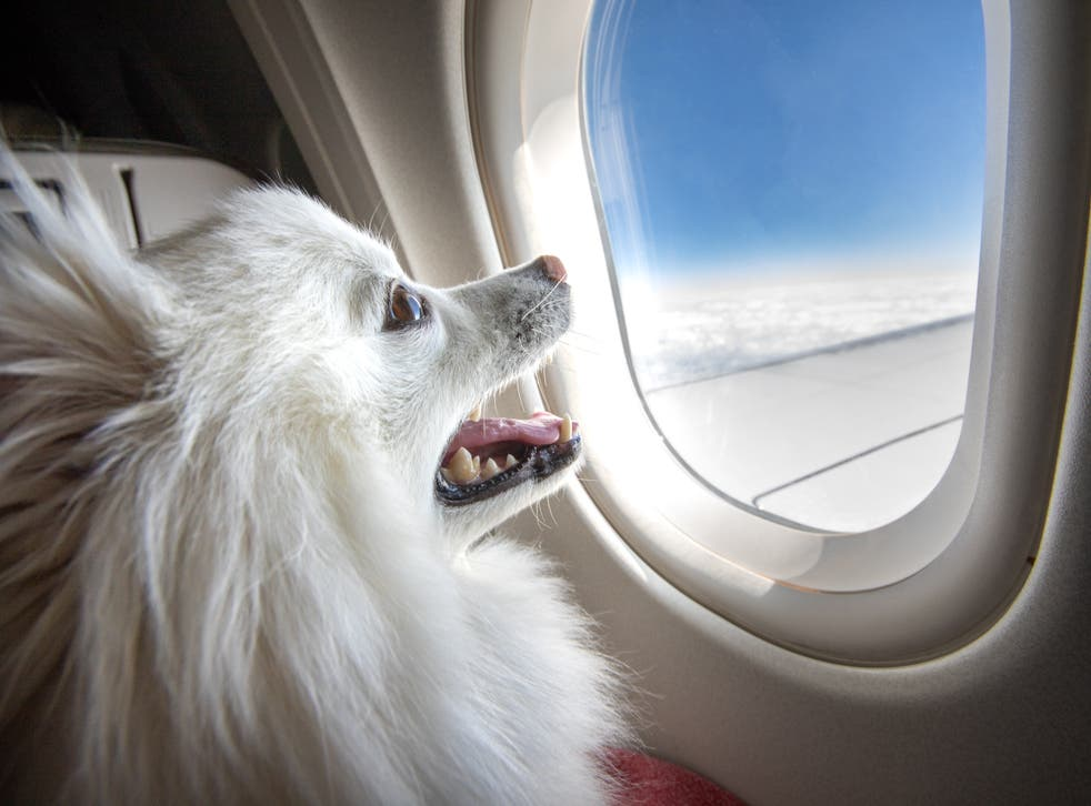American Airlines to ban emotional support animals from flights