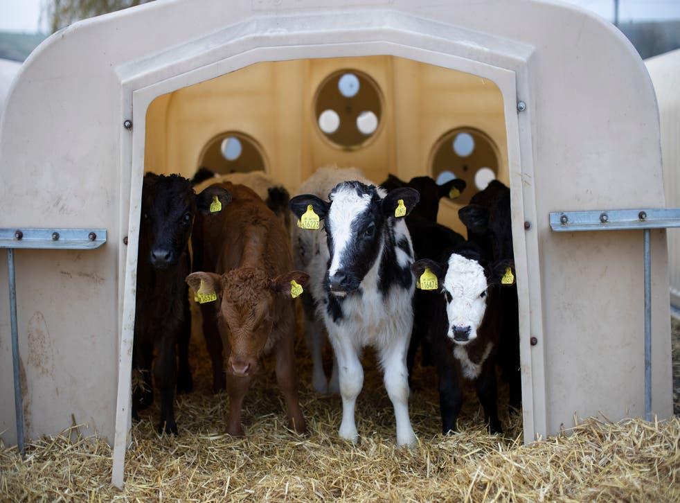 <p>Modern factory farming has already caused health problems, says Peter Stevenson</p>