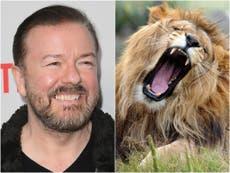 Zoológico de Londres responde a la oferta de Ricky Gervais de ser comido por leones