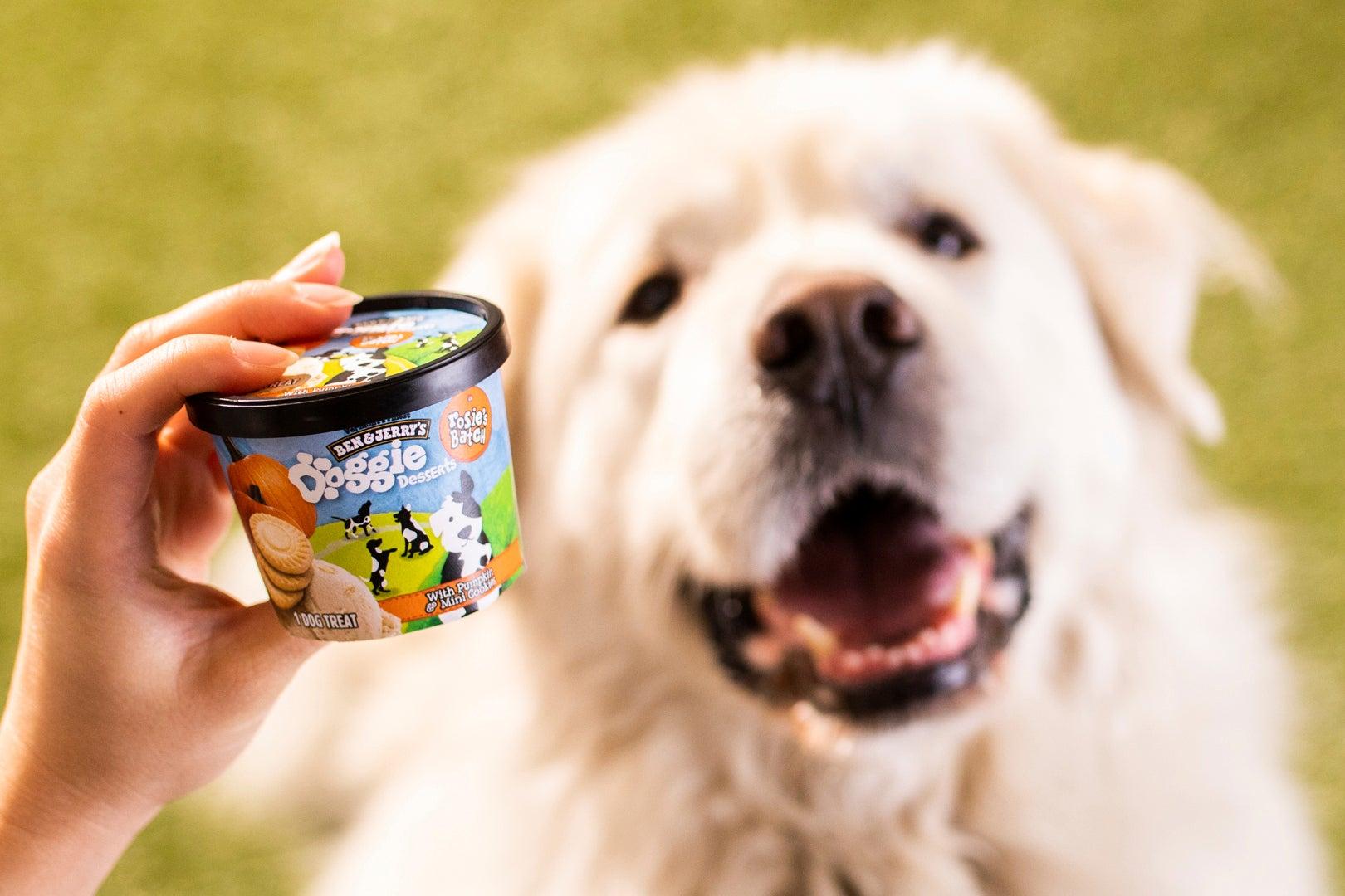 Doggie desserts: Ben & Jerry's enters the pet food business